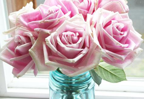 Rosesclose1