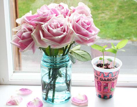 Rosesplant1