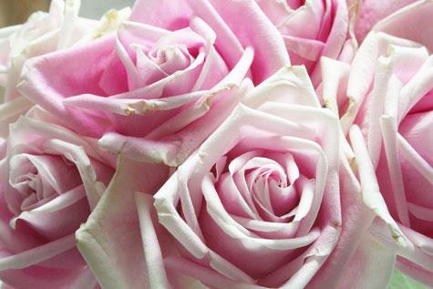 Rosesclose