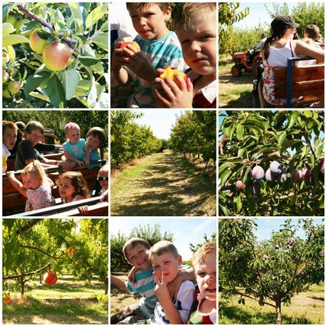 Orchardmosaic